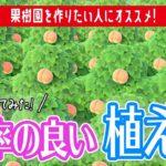 【あつ森検証】果樹園を作るのに「1番効率が良い植え方」とは?検証してみた!