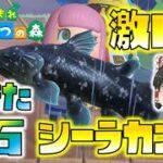 【あつ森】伝説の激レア魚!生きた化石シーラカンスを初ゲット!ゆっくり達のあつまれどうぶつの森 part10