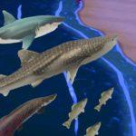 島がバグって巨大魚の群れに悩んでいます。【あつ森】