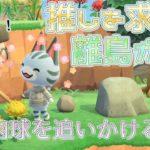 【あつ森】肉球を追いかける離島ガチャ!推しを求めて。時間帯・早朝~朝【あつまれどうぶつの森】