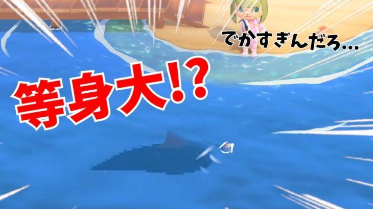 森 シロ ナガスクジラ あつ