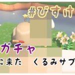 【あつ森】くるみの狙いは? 離島ガチャで推し住民を引くぞおおお #20【しゃちくるみ/あつまれどうぶつの森/Animal Crossing/シュガートース島/ウホウホ島/しゃちく/ちゃちゃまる】