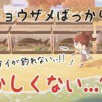 【あつ森】まったくタイが釣れない鬼畜なサンクスギビングデーを過ごしました【あつまれどうぶつの森/Animal Crossing】【実況/シュガートース島/くるみ/しゃちく/しゃちくるみ】