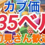 【あつ森】ライブ参加型 カブ価635ベルなど かぶ手数料なし