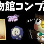【あつ森】博物館コンプ目指す配信!化石・美術品ラストスパート!!!!【あつまれどうぶつの森】