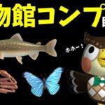 【あつ森】博物館コンプ目指す配信!魚コンプまであともう少しやでぇぇぇぇ!!!!【あつまれどうぶつの森】
