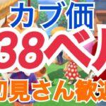 【あつ森】ライブ参加型 カブ価638ベル島588ベルなど かぶ手数料なし
