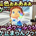 (あつ森)4時間カーニバル羽マラソンで全く出ない『虹羽』を発見した時に興奮で日本語が喋れなくなるスナザメ(あつまれどうぶつの森 切り抜き)