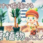 【あつ森】島がぐっとオシャレになる!観葉植物のススメ【島クリエイター | 初心者 | あつまれどうぶつの森】