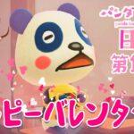 【あつ森】パンダ家族の日常#15『ハッピーバレンタイン』