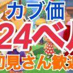 【あつ森】ライブ参加型  カブ価631ベル624ベルなど かぶ手数料なし