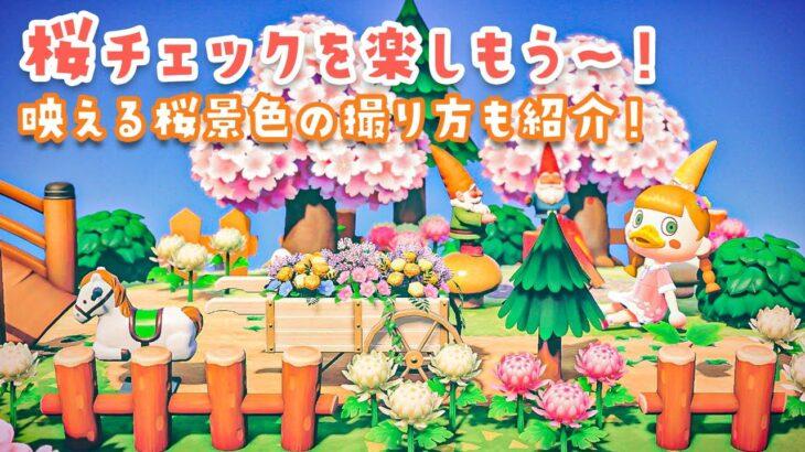 【あつ森】桜に染まった島紹介!映える桜景色の撮り方もチェックするよ〜!【あつまれどうぶつの森】